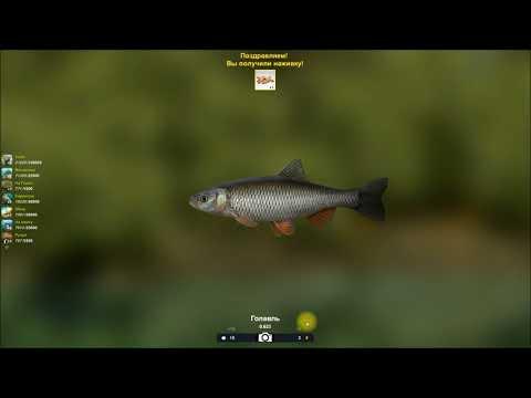 Голавль, мини турнир по ловле головля в игре Трофейная рыбалка 2