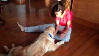 Training Franky (day 6) - Binaisha Deshmukh | Certified Dog Trainer