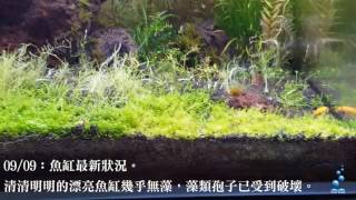 惠弘水族-強效除藻劑實測紀錄