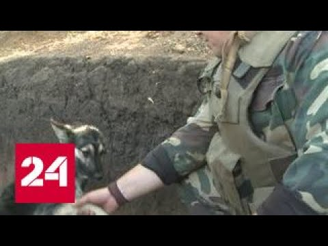 Беспилотники-шпионы появились в небе над ДНР во время перемирия