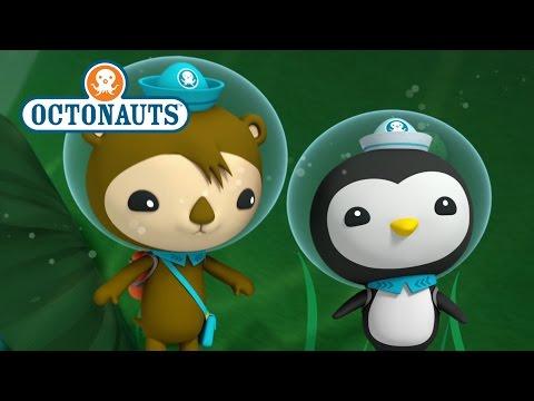 Octonauts: Rare Creatures