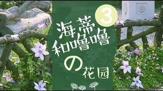 《造园记》122 海蒂和噜噜的花园3
