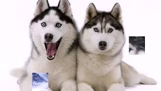 ТОП-10 Самых быстрых пород собак в мире Самые популярные собаки
