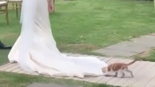 結婚式にキュートな子猫が乱入…ドレスを気に入ってしまったようです(動画)