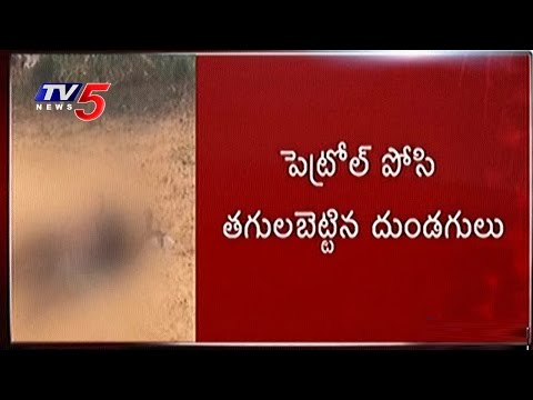 Woman Raped And Burnt Alive In Anantapur | TV5 News