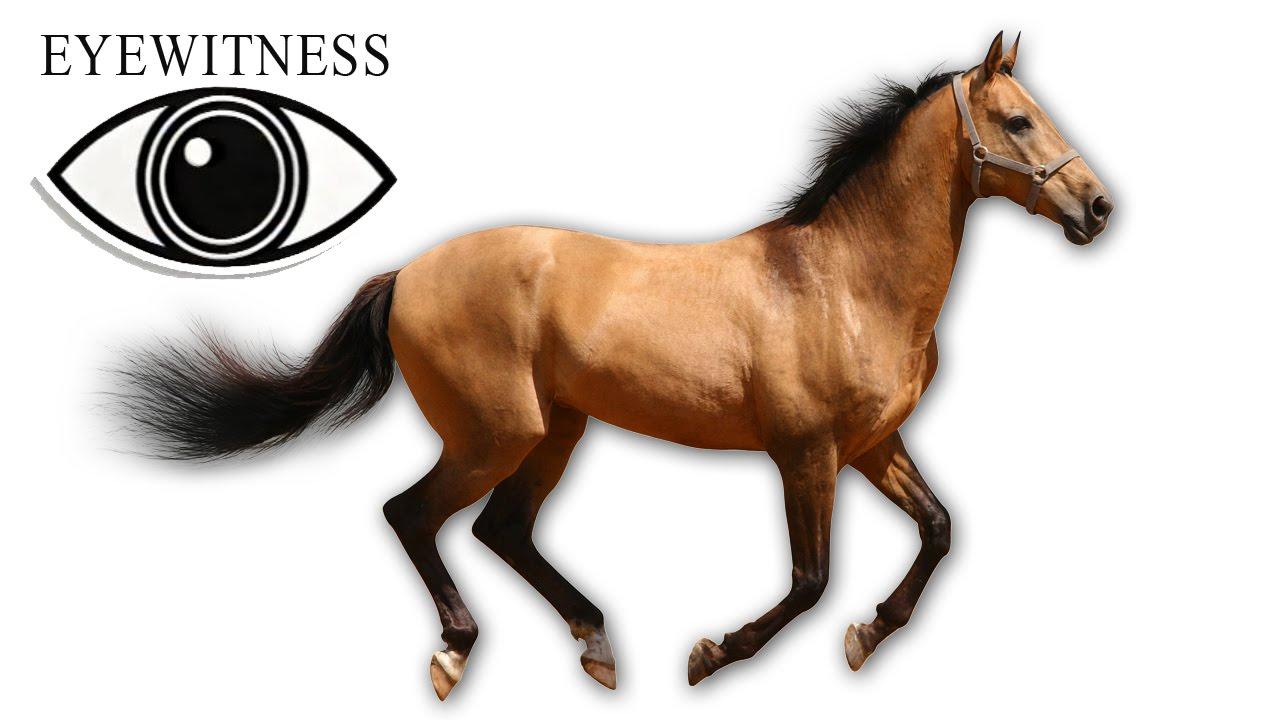 Eyewitness Horse S1e8 Youtube