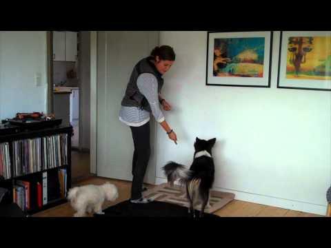 Trn din hund til at vre i ro, nr der kommer gster