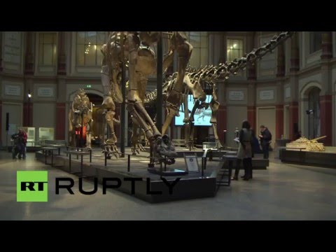 Germany: First ever replica of Spinosaurus skeleton hits Berlin