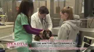 Oradell Animal Hospital 24 hours