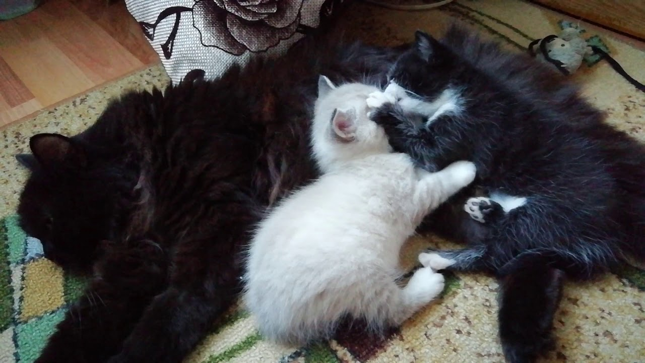 Кошка и котята - YouTube
