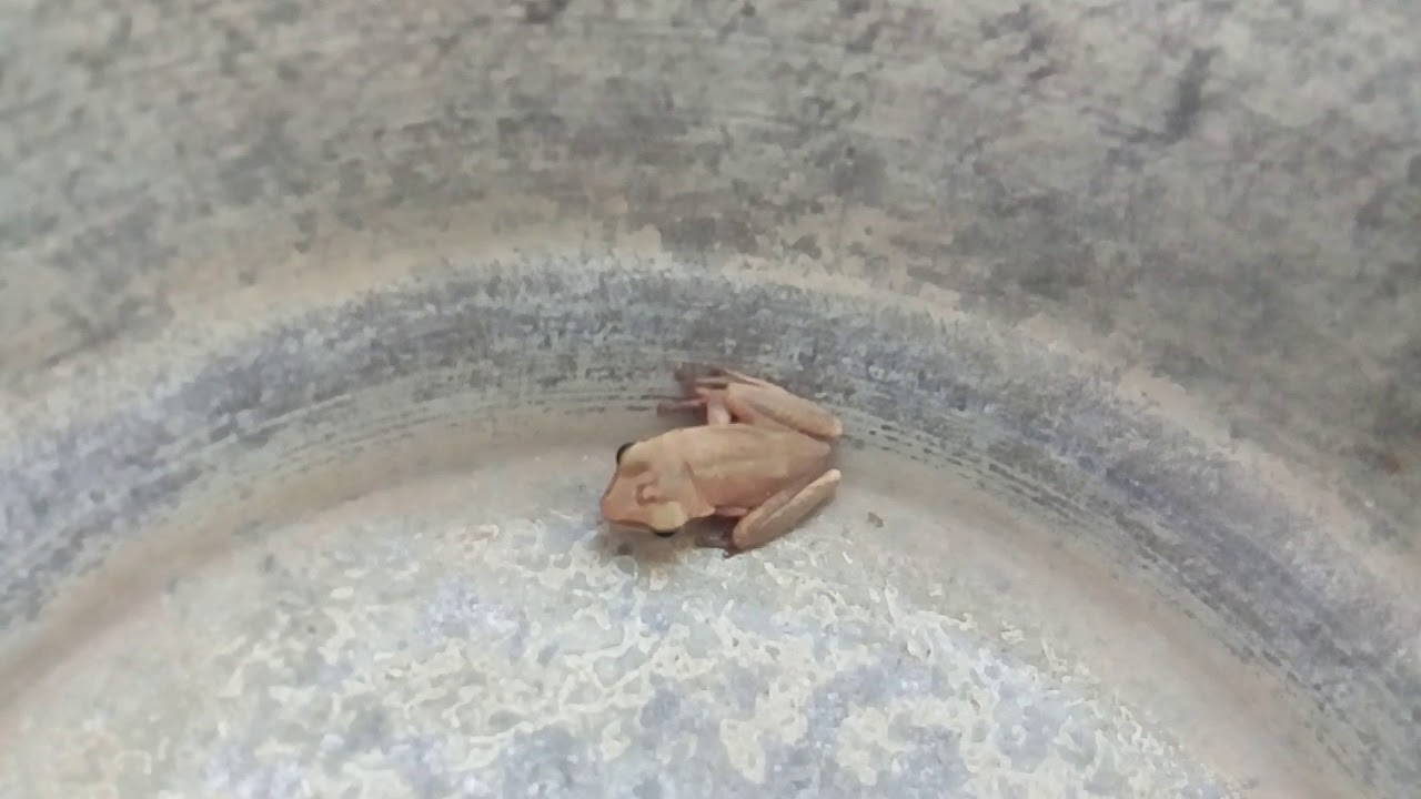 Frog Try to up With High Jump - Domestic Discovery