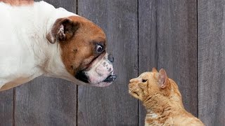 Cute Dog Vs Cats__dogs' Reactions To Cats Stealing Their Beds ( Fvj)