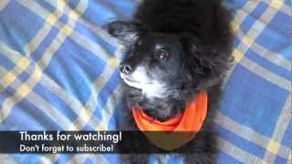 Dog Trick Never Seen Before With Chico The Rescue Dog