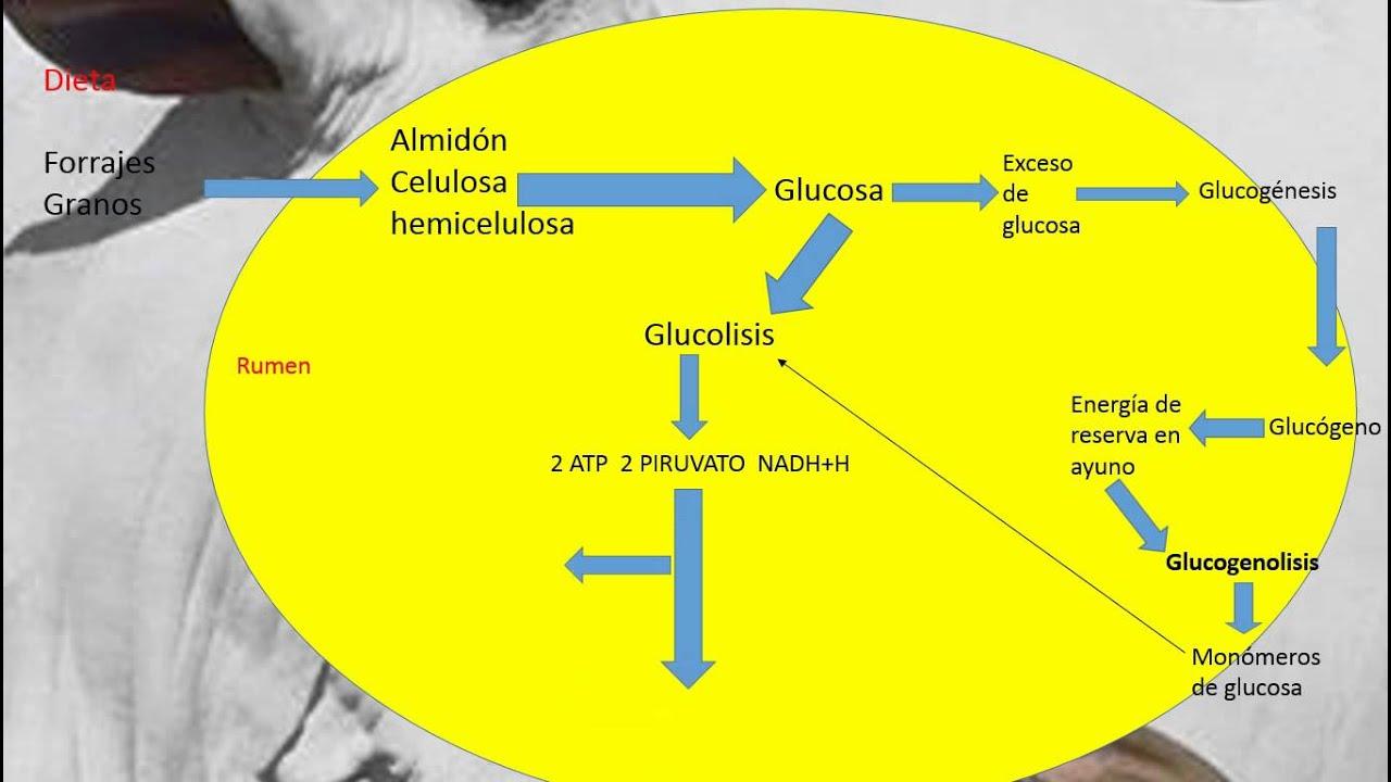 metabolismo ralentizado secretos