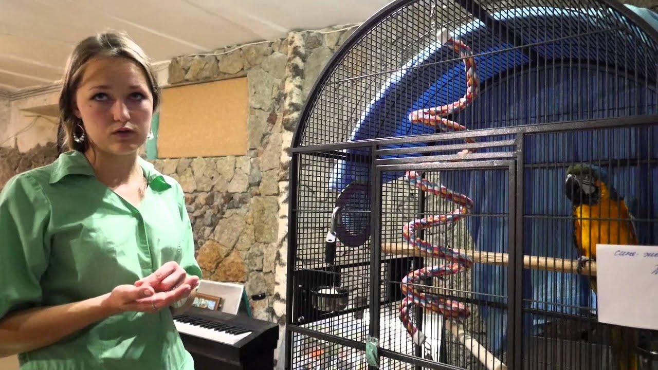 Говорящий попугай Жако Гоша - YouTube