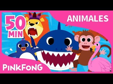 Mejores Canciones de Animales | Tiburón Bebé y +39 | +Recopilación | Pinkfong Canciones Infantiles