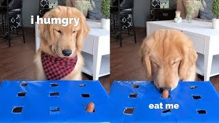 Dog Tries the Wiener Challenge - Hot Dog Challenge