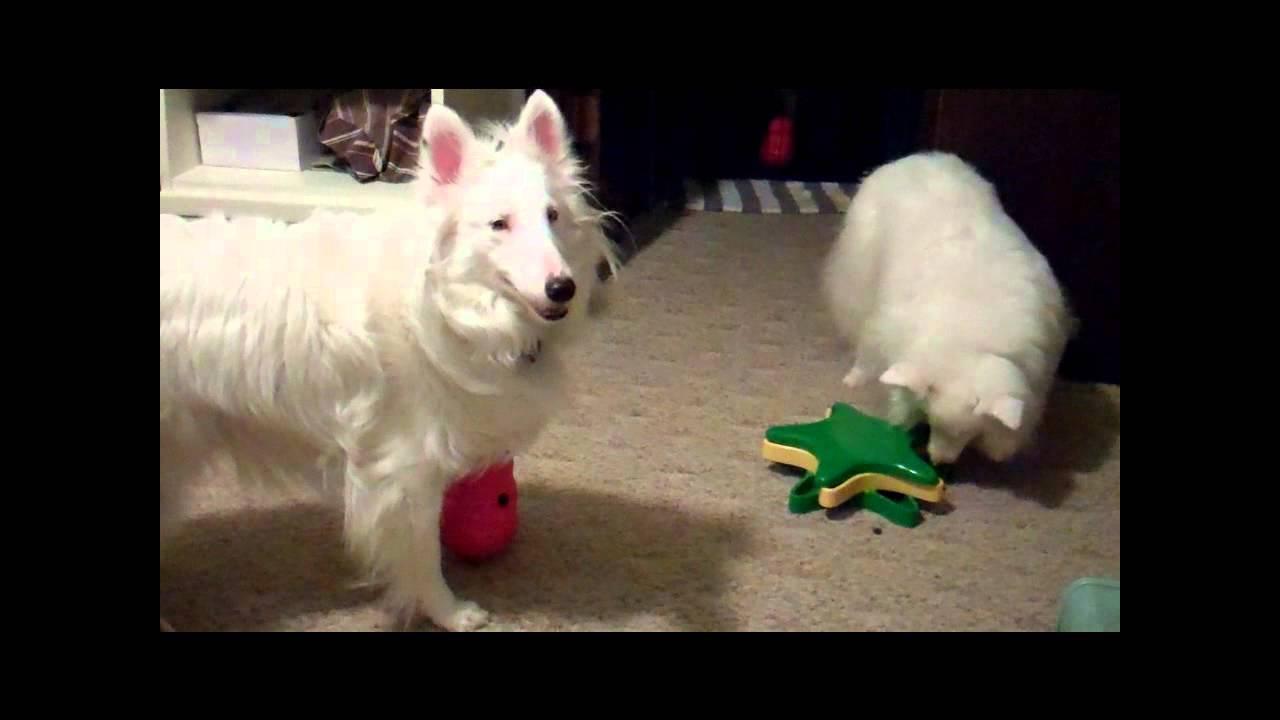 Blind Deaf Dog Enrichment You