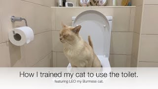 I TRAINED MY CAT TO USE MY HOUSEHOLD TOILET. Using the Litter Kwitter, it really works!