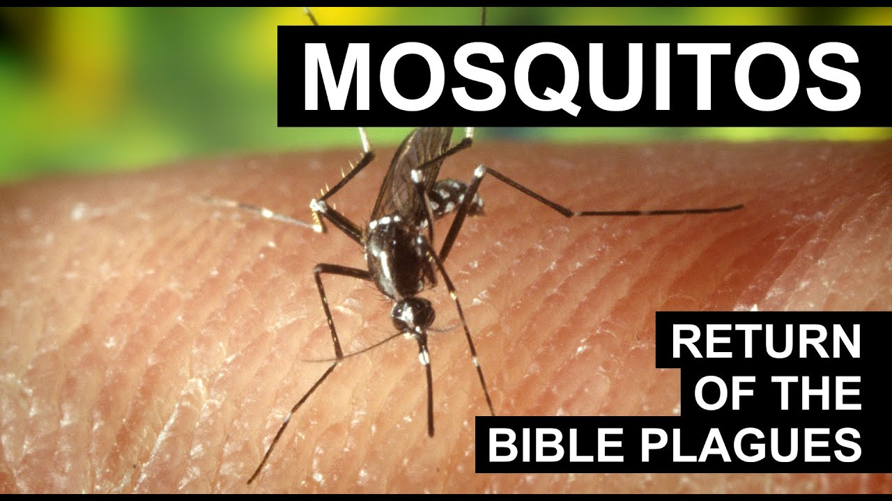 Return of the Bible Plagues: Mosquitoes