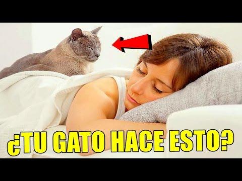 ¿Por qué a tu gato le gusta dormir encima de ti He aquí la respuesta a este misterio