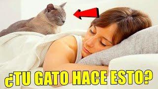 ¿Por qué a tu gato le gusta dormir encima de ti? He aquí la respuesta a este misterio