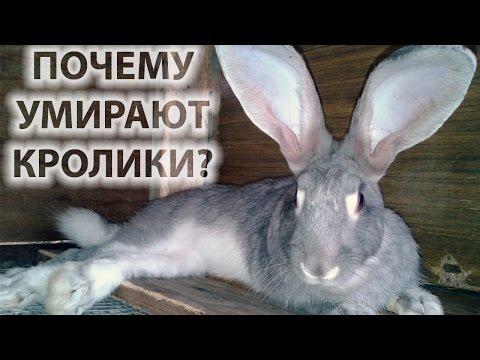 Болезни кролика ринит или как лечить сопли