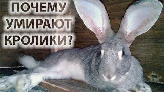 Кролиководство: почему умирают кролики, устраняем причины смерти.(От чего умирают кролики – причины весьма разнообразны. Даже внезапная смерть кролика имеет своё логическо..., 2015-10-07T15:29:13.000Z)
