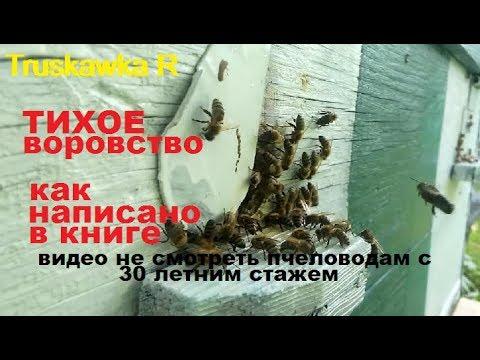 """Пчёлы. Одна из самых распостранённых ошибок """"опытных"""" пчеловодов. Пасеку потерял - книгу не читал!"""