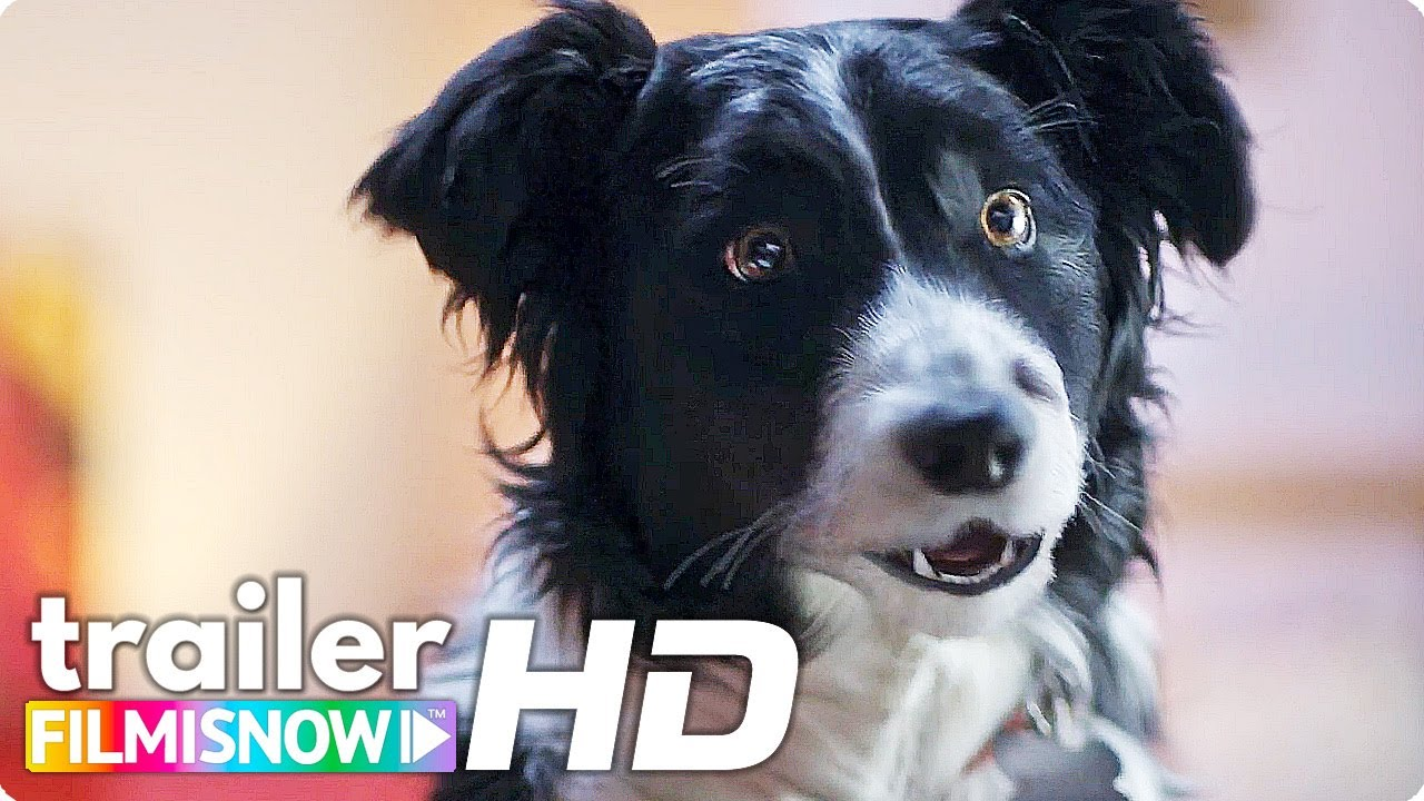 CATS & DOGS 3: PAWS UNITE! (2020) Trailer 🐶🐱 | Family Comedy Movie