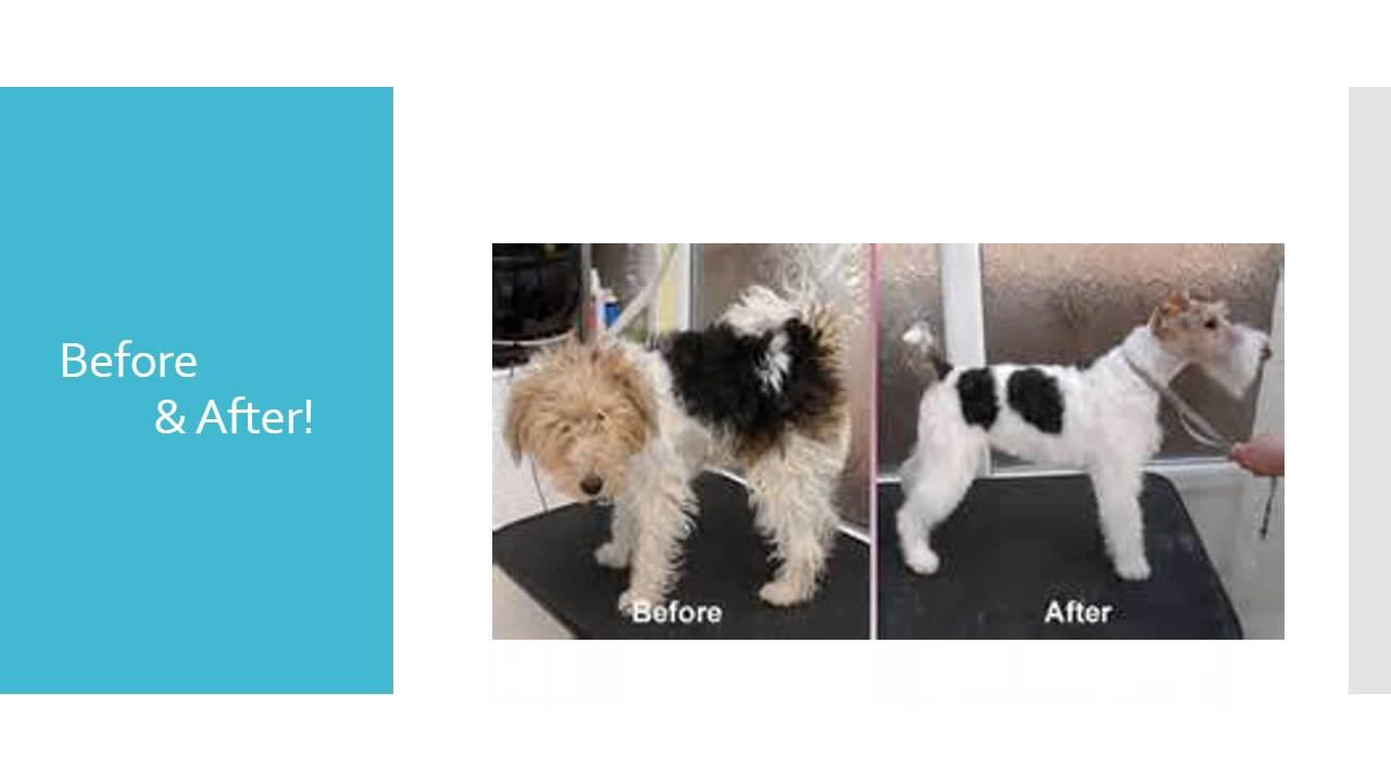 Welcome to temecula pet salon spa youtube solutioingenieria Images