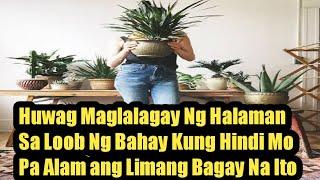 Huwag Muna Bumili O Maglagay Ng Bagong Halaman Sa Bahay,Kung Hindi Mo Pa Alam Ang 5 Bagay Na Ito