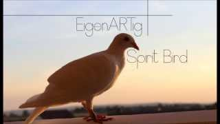 Xavier Rudd  - Spirit Bird (EigenARTig Remix)