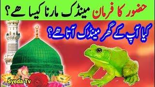 Mendak Maarne se pehle Nabi pak ka farman sune | Killing Frog in islam || Hadith || Prophet Muhammad