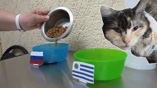 Кошка Зина предсказала результат матча Россия - Уругвай.