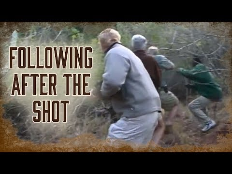 Following Up After The Shot On Lions Or Leopards | 10