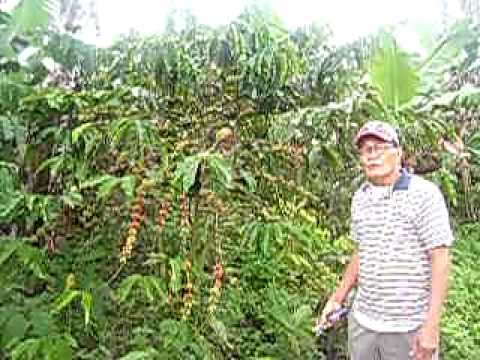 Philippine Coffee King