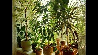 Комнатные растения в августе 2019