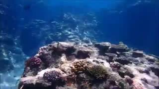 備瀬の海のアウトリーフ動画です。 シュノーケル.