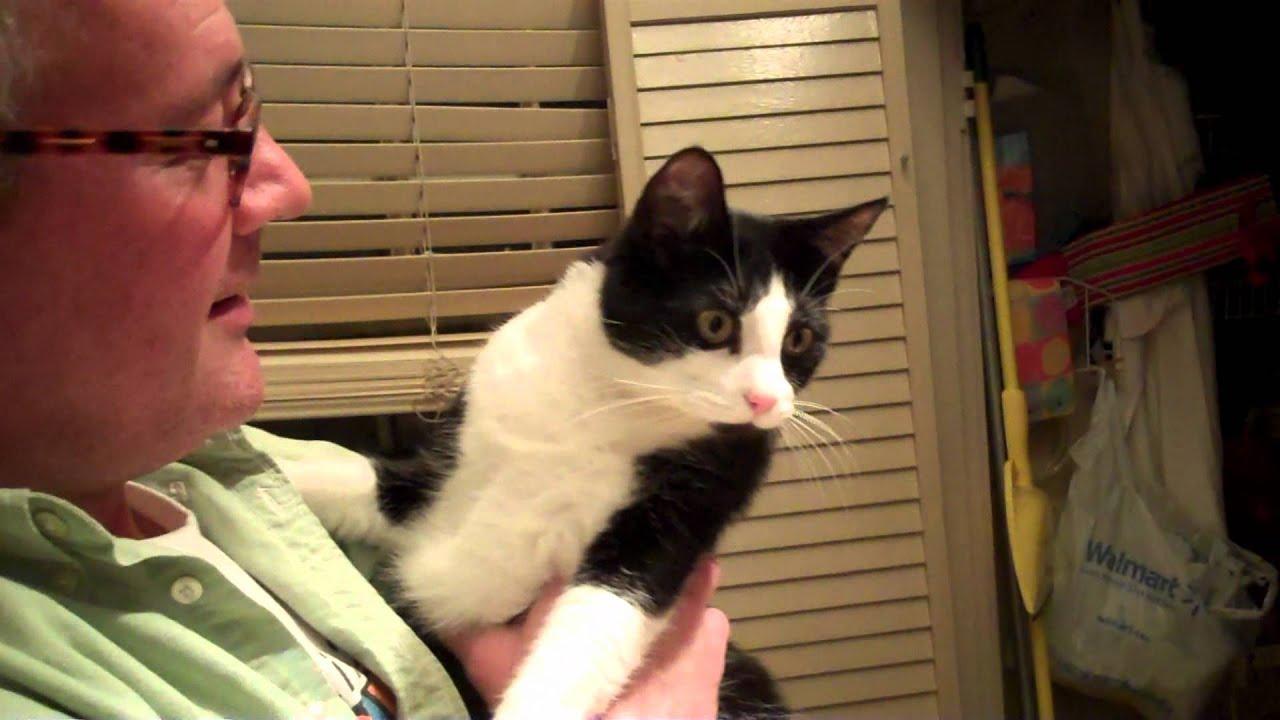 Teasing the Cat - YouTube