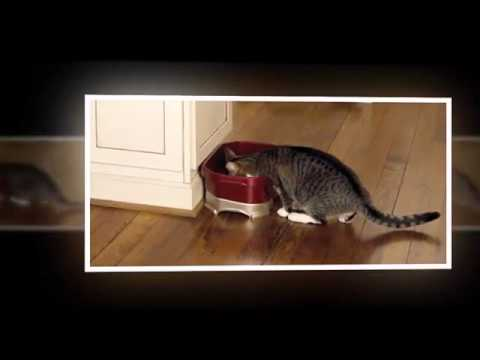 Neater Feeder Cat Bowl Review|Neater Feeder Cat And Dog Bowls