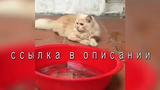 Милые котята. Интересные видео с кошечками и котиками. Лучшие приколы.