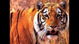 In the animal world - Slide show of wild animals (В мире животных - Слайд-шоу диких животных)