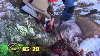 Fred Eichler: How to quarter an Elk in less than 10 min. Gutless field dressing
