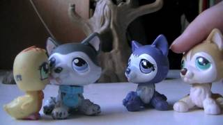 """LPS Kyle the Wolfdog (part 4) REMAKE """"Quakers"""""""