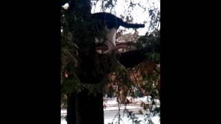 Special Cat Tree Ladder