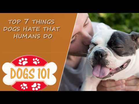 Top 7 Things Dogs Hate that Humans Do