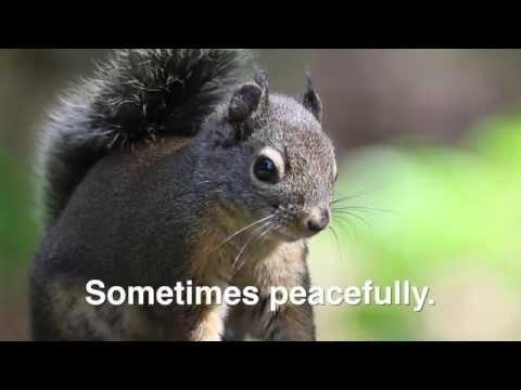 Squirrel Having A Cry Doovi