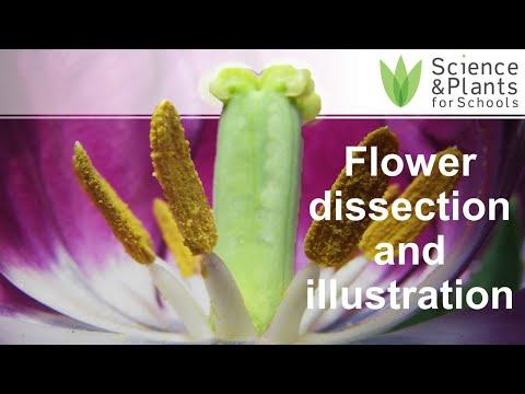Beautiful Spring Flower Anatomy Of A Hibiscus Flower Spring Flower
