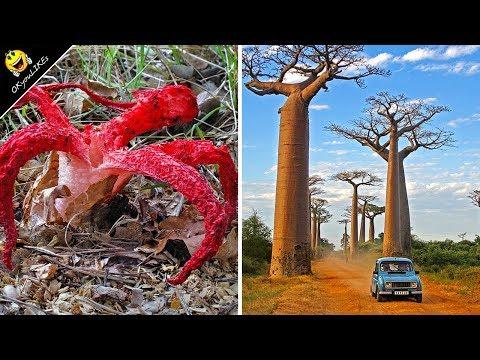 ต้นไม้และพันธุ์พืช สุดแปลก ประหลาด ที่คุณเห็นแล้ว ต้องอึ้ง !!   OKyouLIKEs